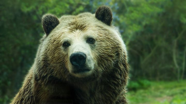 Is the Bear Market Over? Tron (TRX) CEO Justin Sun Thinks So