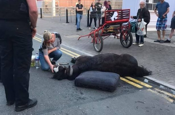 Two arrested as 'pregnant' horse collapses in Cardiff city centre after 'being forced to pull trap on hottest day of the year'