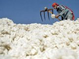 Rising prices worry cotton trade