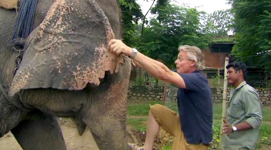 Dark truth of how elephants are 'broken' to ride as charity drops Martin Clunes