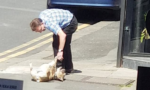 Dog owner struggles to get bulldog moving after it lies down on street