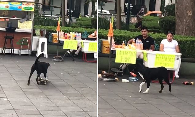Dog rode a skateboard, crashed into a stand filled with beverages