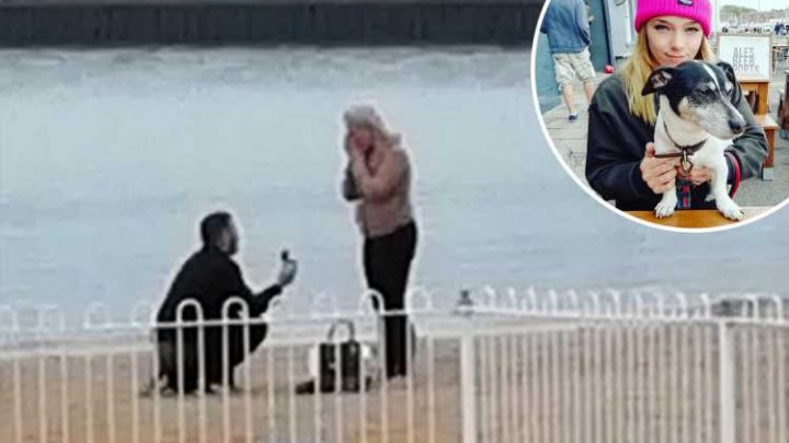 Dog walker hunts for couple after filming romantic beach proposal
