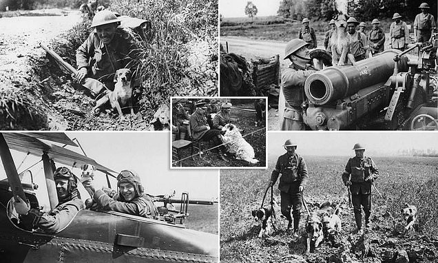The courageous canines who dodged bullets during WWI