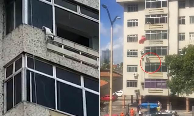 Fireman saves dog's life after spotting it hanging from sixth-floor