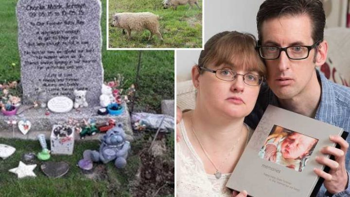 Mum heartbroken as rampaging PIGS dig up grave of baby son who died of sepsis