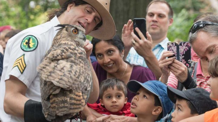 New Yorkers flock to Central Park to play with birds