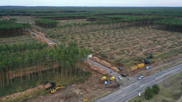 Court orders Tesla to stop chopping down trees at German factory site