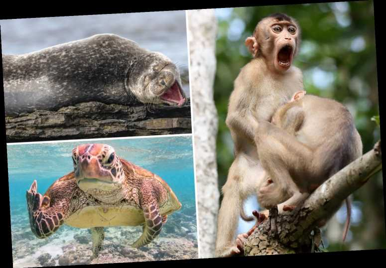 Cackling seals and VERY frisky monkeys among hilarious finalists in the 2019 Comedy Wildlife Photography Awards 2020