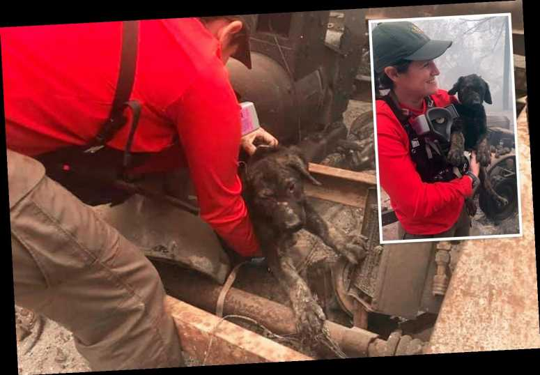 Lucky puppy rescued by emergency service workers inspecting home destroyed by wildfires in California