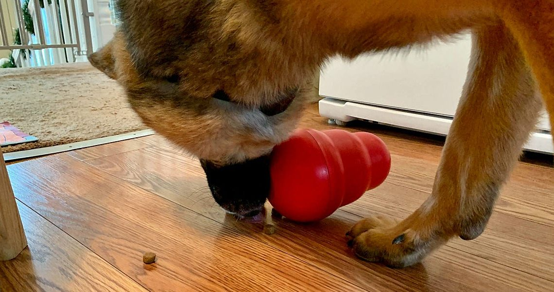 The Kong Wobbler is a food-dispensing toy that keeps my dog from scarfing down his meals