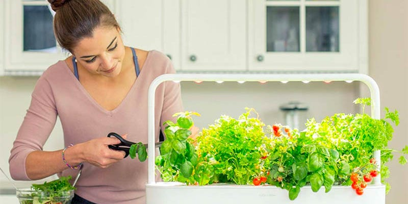 I grew basil and lettuce using this indoor smart garden, and the process was truly effortless