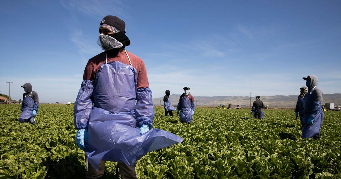 Trump administration sued over decision that critics say would slash wages for more than 200,000 farm workers