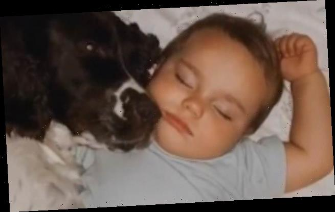 Fur-ever friends! Adorable toddler sleeps next to his dog every night