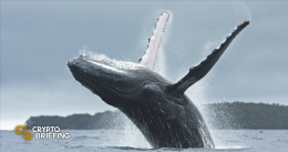 Ethereum Primed To Rebound Thanks to Whale Buyers