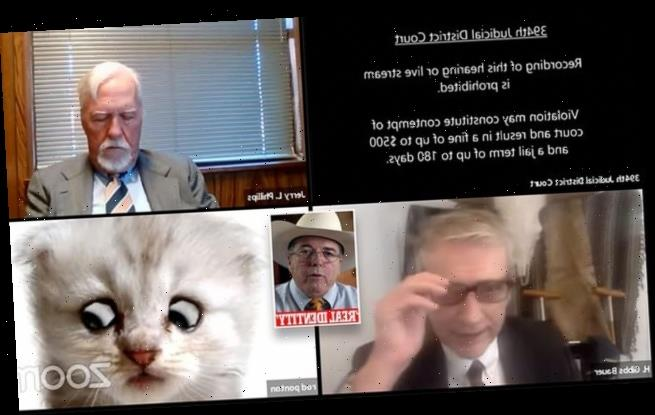 Hilarious moment lawyer appears via court zoom with a kitten filter