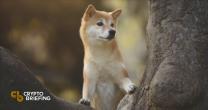 Dogecoin Struggles to Resume Uptrend Despite Renewal