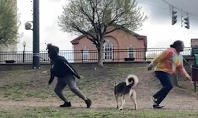 Pet owners test out a TikTok loyalty challenge on their dogs