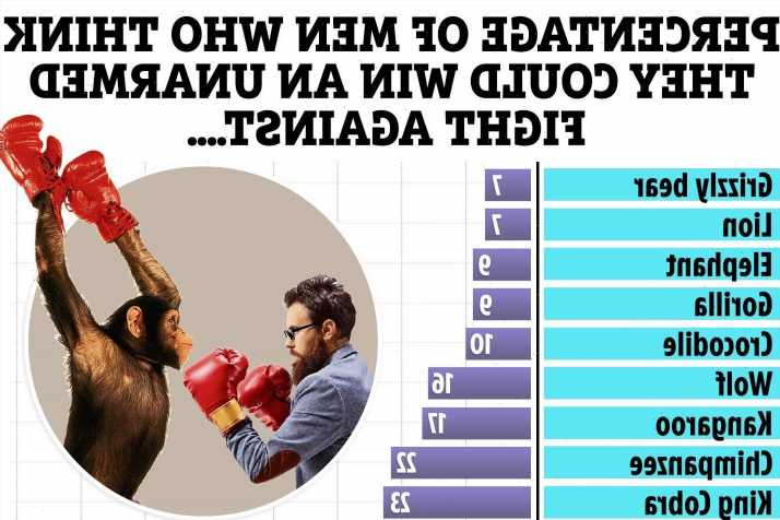 One in five men reckon they could beat a chimpanzee in a fight even though they stand no chance