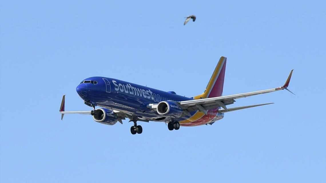 Southwest Airlines pauses plans to resume alcohol service after flight attendant assaulted
