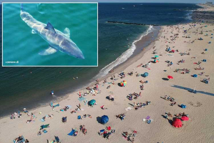 Teenage shark-throb tracked on the prowl in New York waters