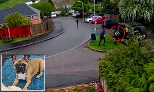 Thieves caught on CCTV snatching French bulldog in daylight raid