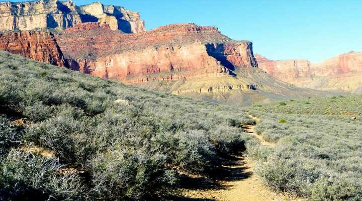 53-year-old woman dies hiking through Grand Canyon during extreme heat