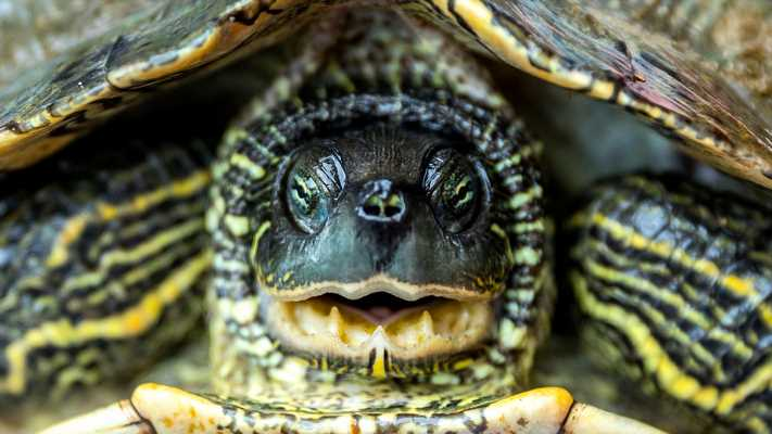 Turtle power, lotto mania, slaughterhouse strike: News from around our 50 states