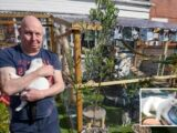 Cat-loving couple who built massive £1,500 jungle gym for their beloved pets fear it will be torn DOWN after complaints