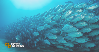 FTX's NFT Listing Service Disrupted by Fish