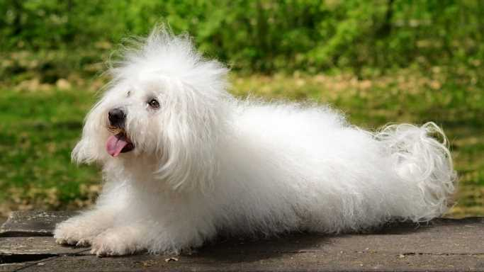This Is The Best Apartment Dog Breed In America