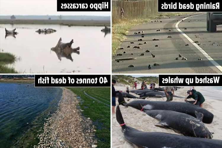 Inside world's weirdest animal death mysteries – from 5000 birds dropping out of the sky to 40 tonnes of dead carp